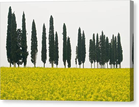 Toscana Cypresses Canvas Print by Igor Voljch