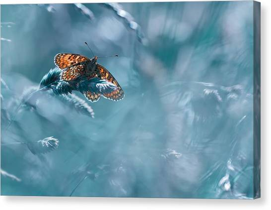 Bug Canvas Print - Total Kheops by Fabien Bravin