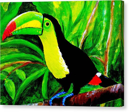Toucan Sam Canvas Print