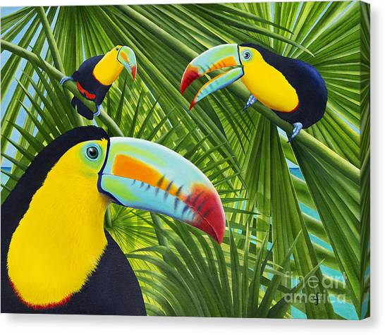 Toucan Canvas Print - Toucan Threesome by Carolyn Steele