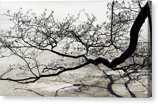 Wonderful Tree Canvas Print