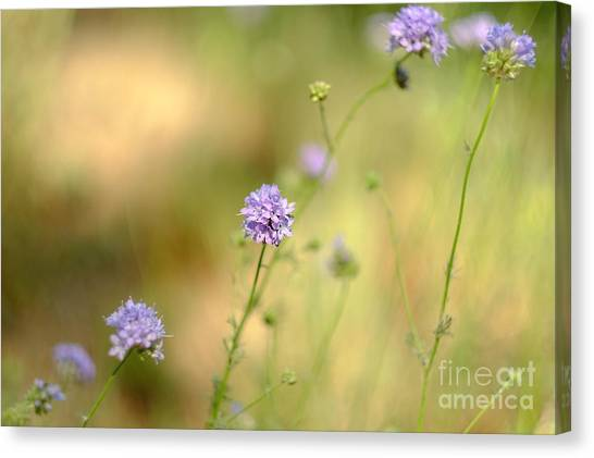 Touch Of Lavender Light Canvas Print