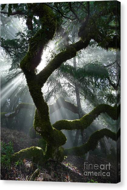 Touched By A Miracle Canvas Print by JoAnn SkyWatcher