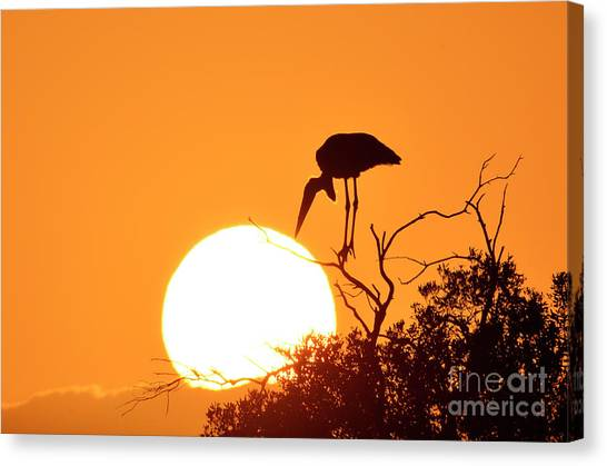 Touching The Sun Canvas Print