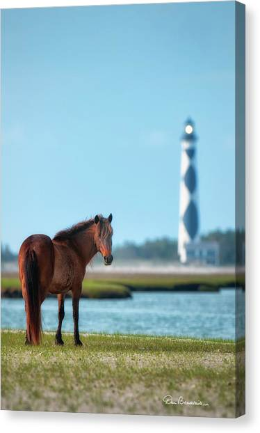 Tour Guide Cape Lookout 3509 Canvas Print