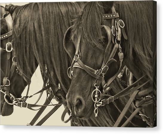 Tour Lexington Pair Canvas Print by JAMART Photography