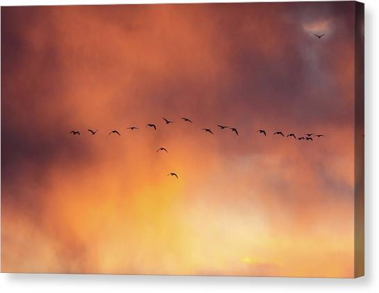 Towards The Sun Canvas Print