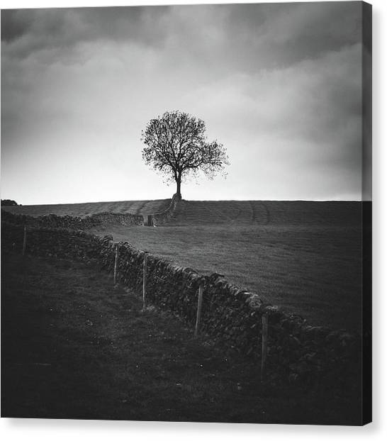 Peak District Canvas Print - Towards The Tree by Chris Dale
