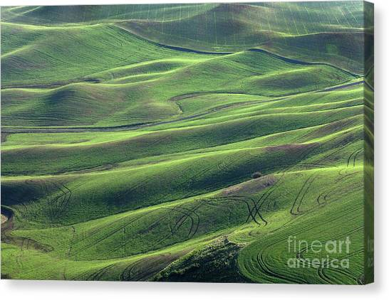 Tractor Tracks Agriculture Art By Kaylyn Franks Canvas Print