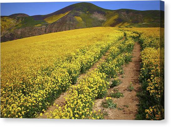 Carrizo springs canvas prints page 2 of 5 fine art america carrizo springs canvas print trail of wildflowers up the temblor range at carrizo plain national mightylinksfo