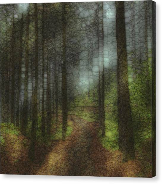Forest Paths Canvas Print - Trail Series 6 by Jack Zulli
