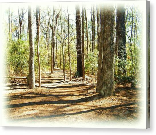 Trail Walk Canvas Print by Nereida Slesarchik Cedeno Wilcoxon
