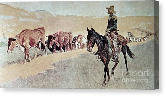 Bull Riding Canvas Print - Trailing Texas Longhorns by Frederic Remington