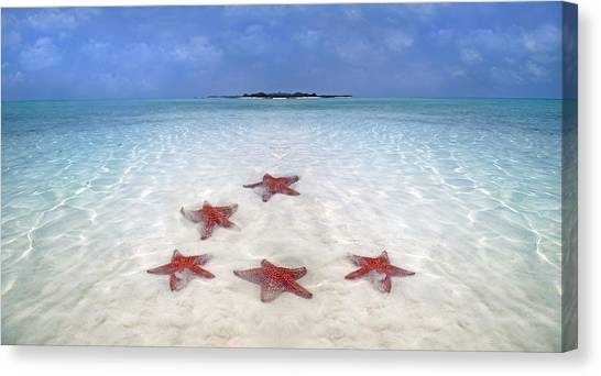 Carribbean Canvas Print - Tranquil Inspiration  by Betsy Knapp