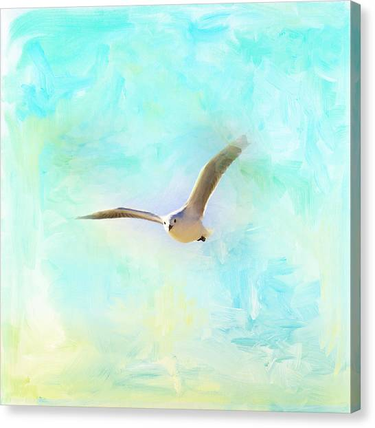 Canvas Print - Tranquil Shores - Gull by Amanda Lakey