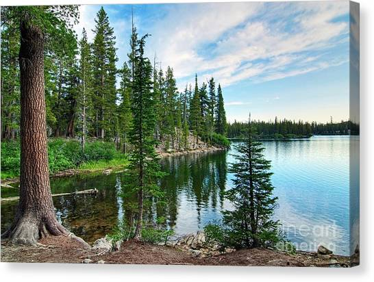 Pine Trees Canvas Print - Tranquility - Twin Lakes In Mammoth Lakes California by Jamie Pham