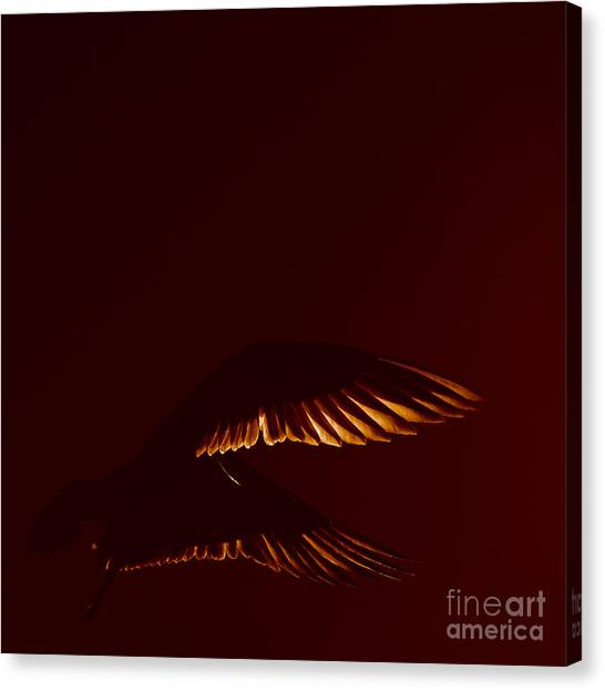 Transiently Translucent Canvas Print