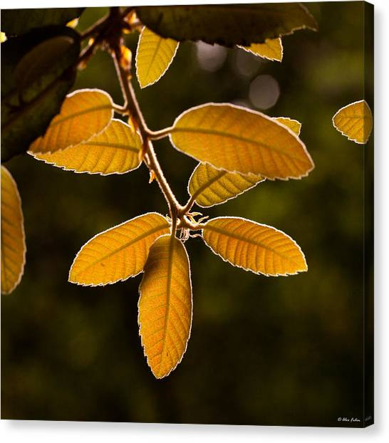 Translucent Leaves Canvas Print