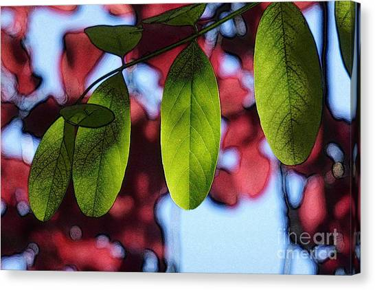 Transparence 21 Canvas Print