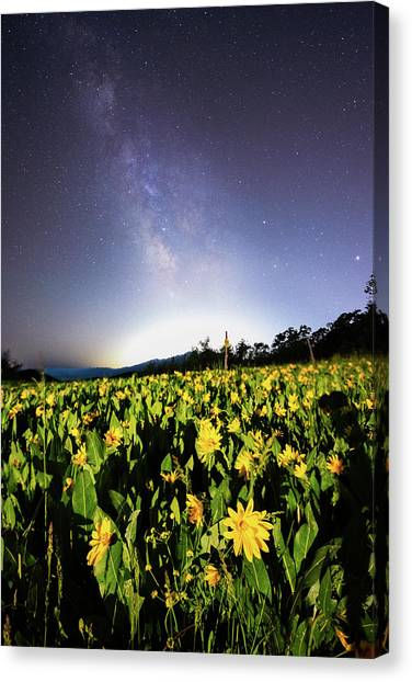 Trapper's Loop Wildflowers Canvas Print