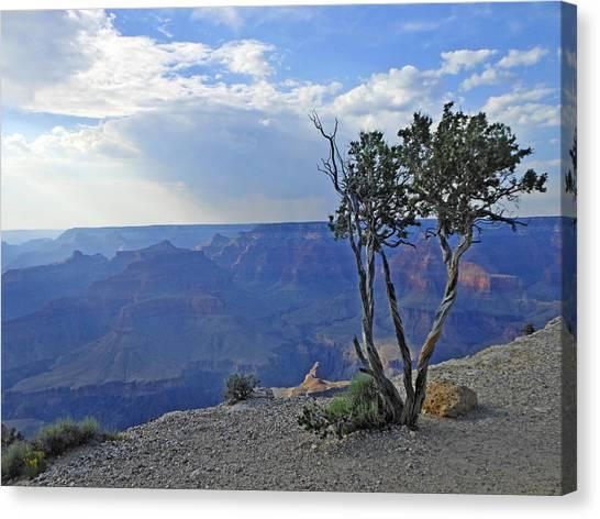 Grand Canyon Canvas Print - Tree by Alice Gasparotto