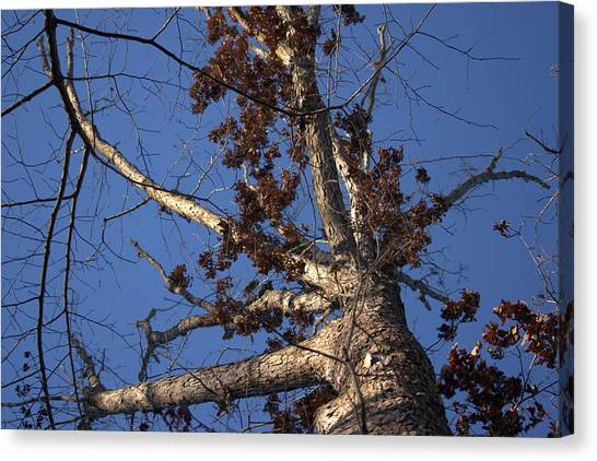 Tree And Branch Canvas Print