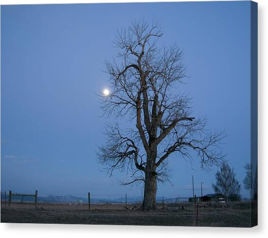 Tree And Moon Canvas Print
