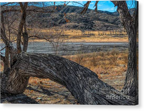 Tree At Elizabeth Lake Canvas Print