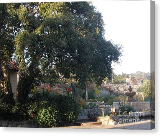 Tree At Mission Carmel Canvas Print