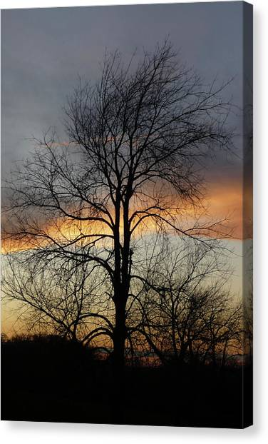 Tree At Sunset Canvas Print by Jerry Weinstein