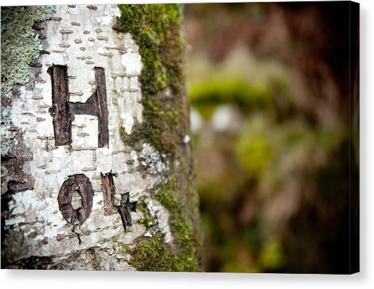 Tree Bark Graffiti - H 04 Canvas Print