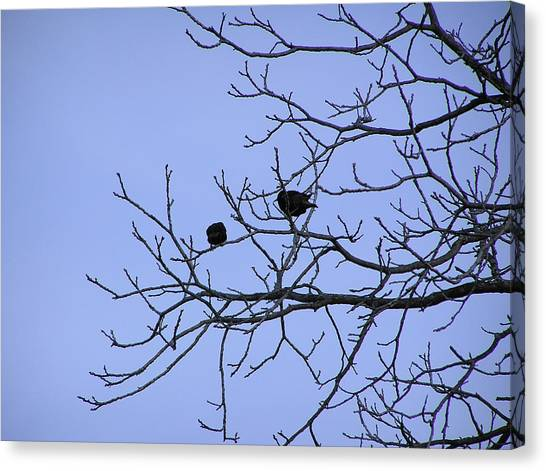 Tree Birds And Sky Canvas Print by Richard Mitchell