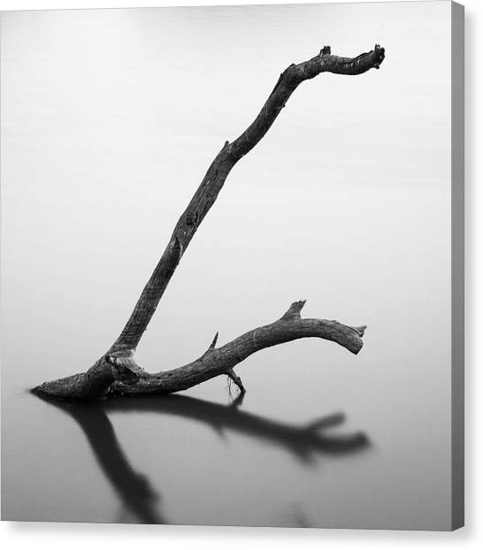 Tree Branch On The Water Canvas Print
