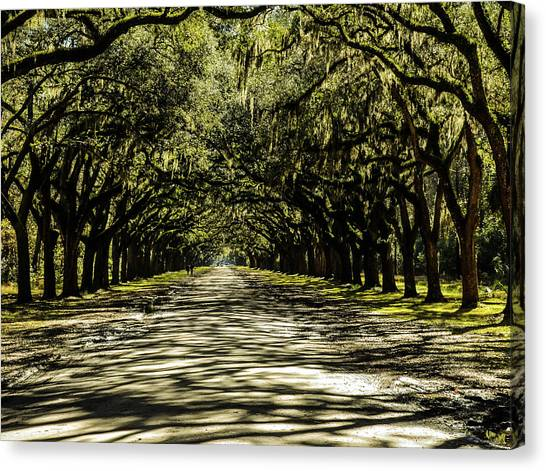 Tree Covered Approach Canvas Print