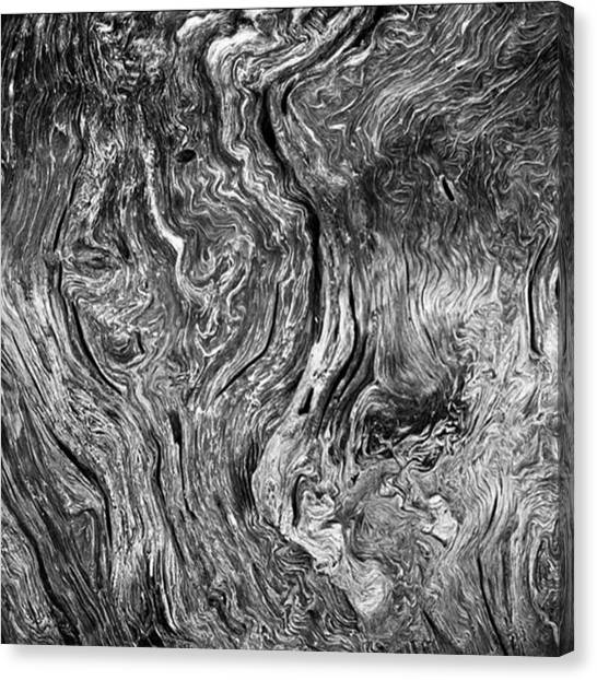 Japanese Canvas Print - Tree Cross Section Abstract. Taken In by Alex Snay