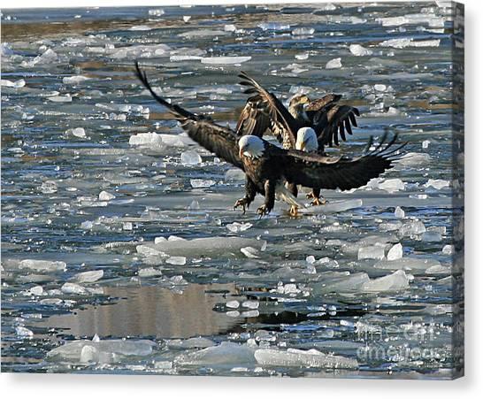 Tree Eagles On Ice Canvas Print