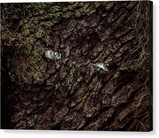 Tree Eyes Canvas Print