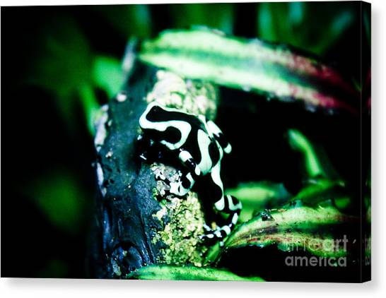 Tree Frog Canvas Print by Brenton Woodruff
