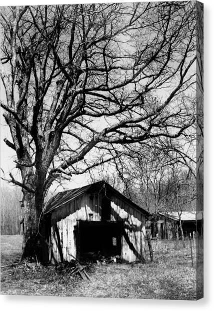 Tree-hut Canvas Print by Curtis J Neeley Jr