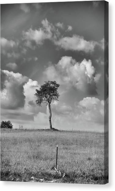 Canvas Print featuring the photograph Tree In A Field by Guy Whiteley