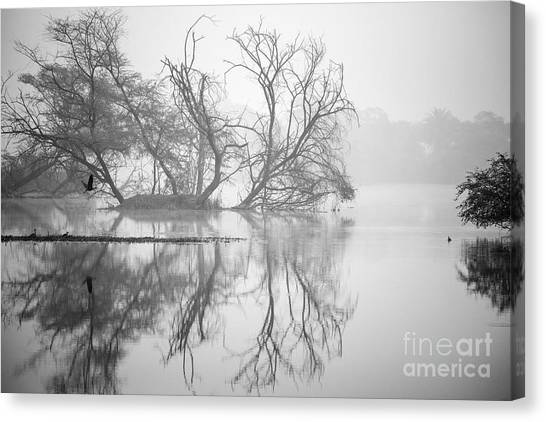 Tree In A Lake Canvas Print