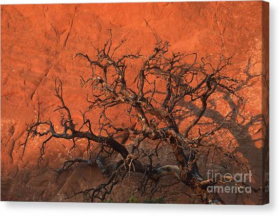 Tree In Arches Canvas Print by Stan and Anne Foster