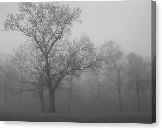 Tree In Black And White Canvas Print by James Jones