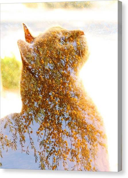 Tree In Cat Canvas Print