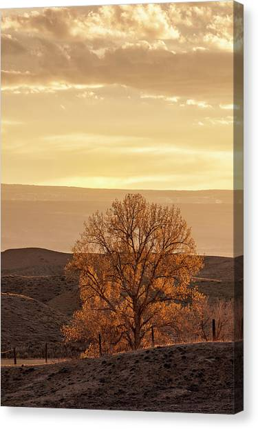 Canvas Print featuring the photograph Tree In Desert At Sunset by Denise Bush