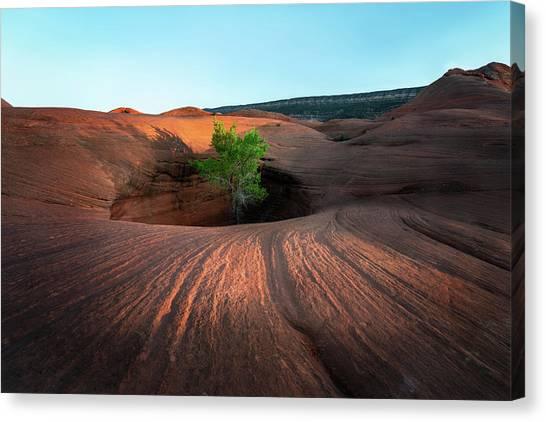Tree In Desert Pothole Canvas Print