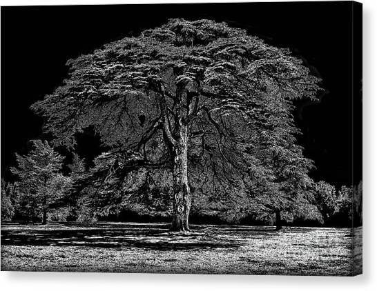 Tree In England Canvas Print