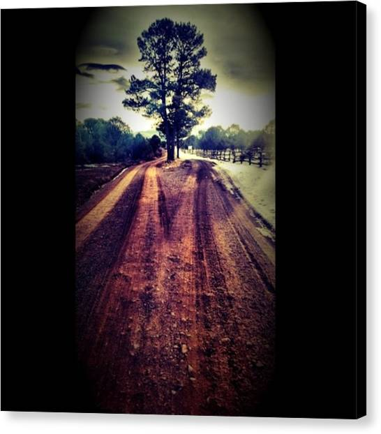 Dirt Road Canvas Print - #tree In #middle Of #dirt #road Near by Ron Meiners