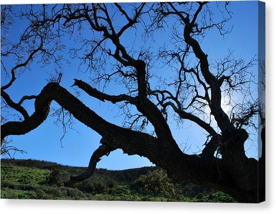 Tree In Rural Hills - Silhouette View Canvas Print