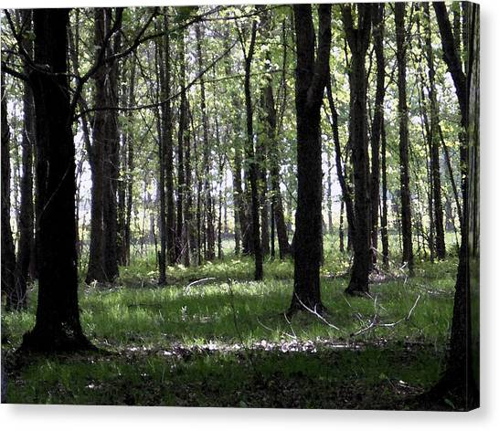 Canvas Print featuring the photograph Tree In The Woods by Michelle Audas